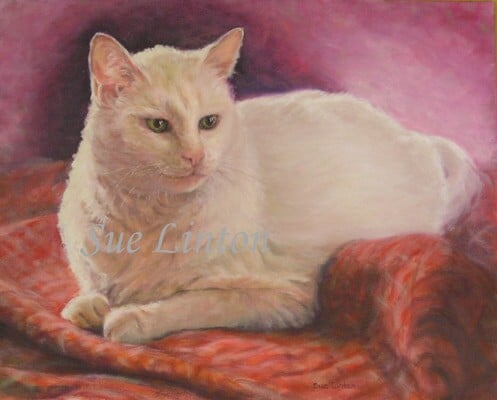 A pet portrait of a white cat