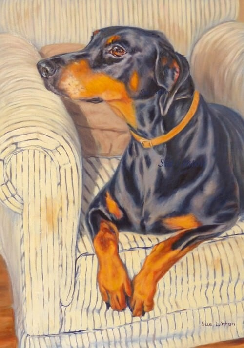 A pet portrait of a Doberman dog in a chair