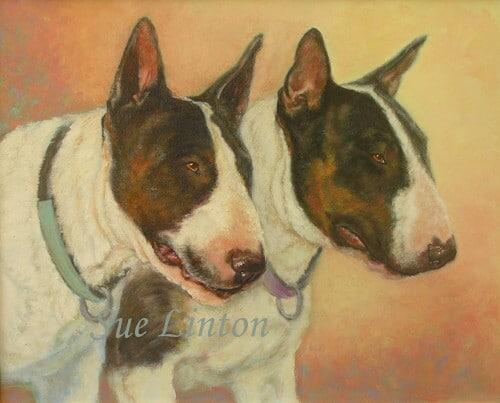 A pet portrait of 2 bullterrier dogs