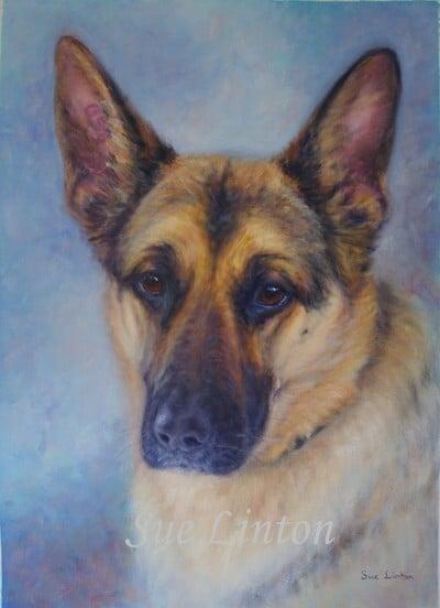 A pet portrait of an Alasatian dog