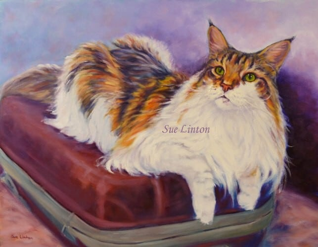 A portrait of a Maine Coon cat on a suitcase
