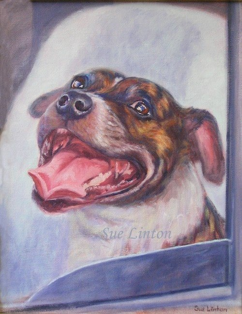A painting of a  Staffy dog in a car