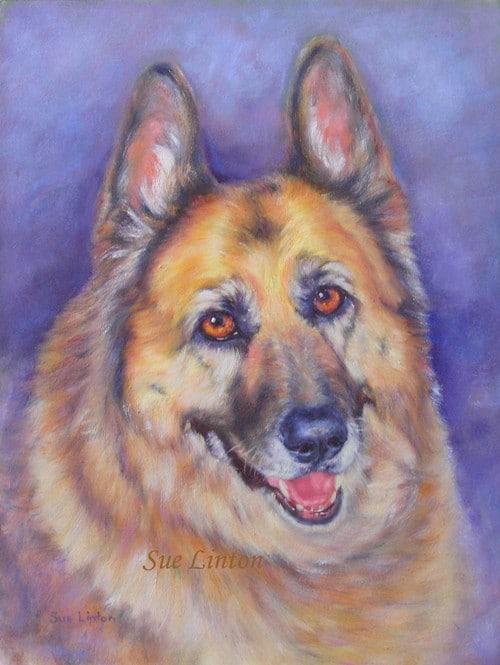A pet portrait of an Alsatian dog