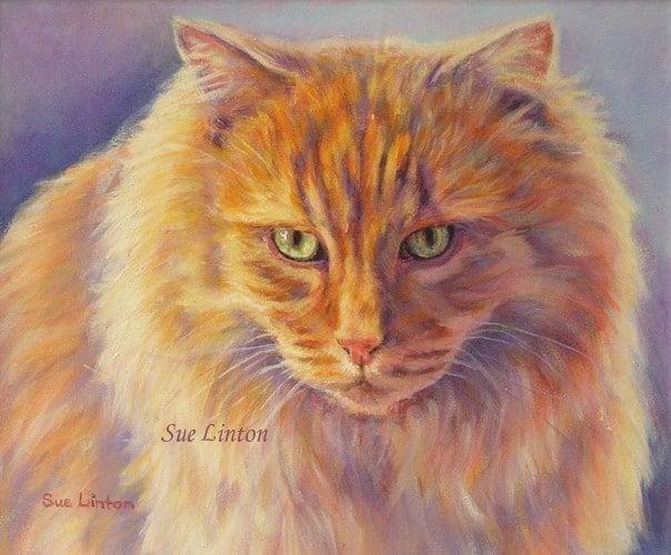 A pet portrait of a ginger cat