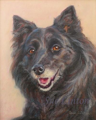 A pet portrait of a Border Collie cross dog