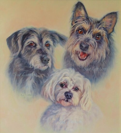 A portrait of 3 terriers