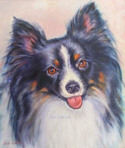 A pet portrait of a papillon dog