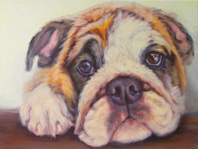 A portrait of a bulldog puppy