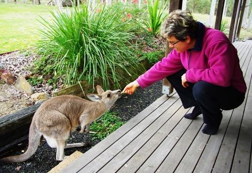 Sue feeding a tame kangaroo
