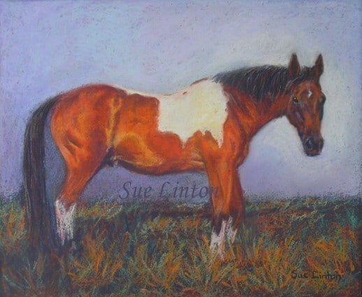 A portrait of a skewbald horse