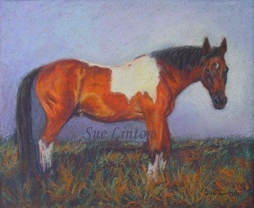 A pet portrait of a coloured horse