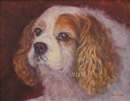 A portrait of a Cavalier spaniel