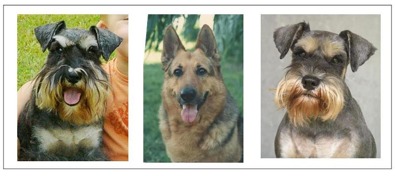 The mockup I showed Carol so she could get an idea of what position each dog would be in in the portrait.