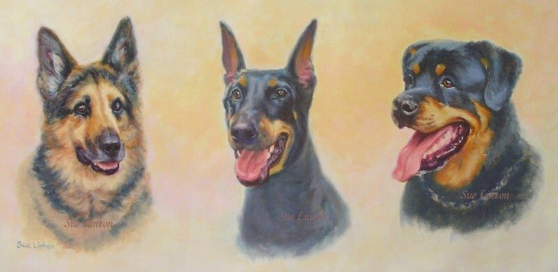 A pet portrait of an Alsatian , Doberman and a Rottweiler dog