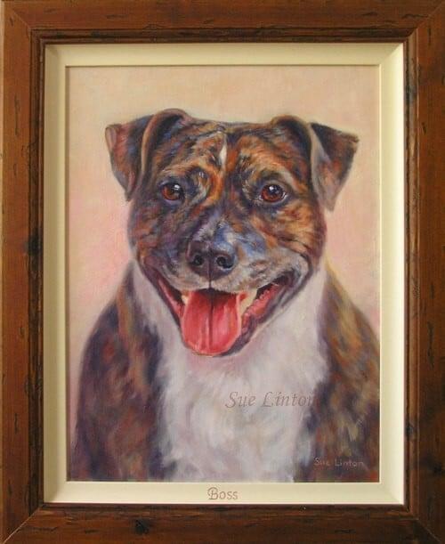 A framed pet portrait of a staffy dog