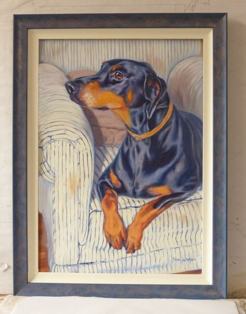 A framed memorial portrait of a Doberman dog