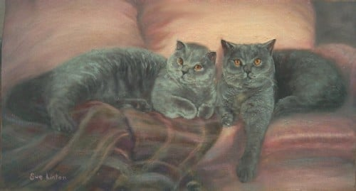 A portrait of  two British Blue cats on a lounge