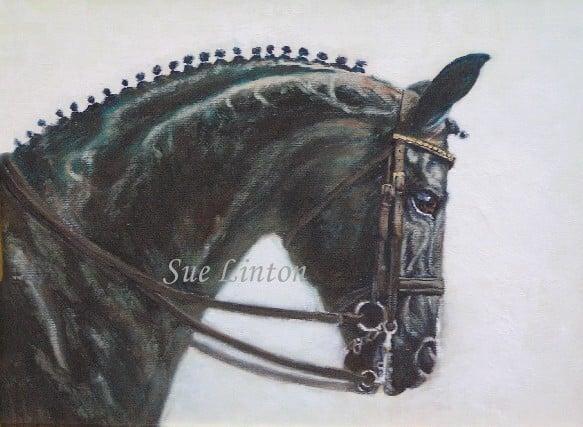 A portrait of a warmblood dressage stallion Richmeed  Medallion