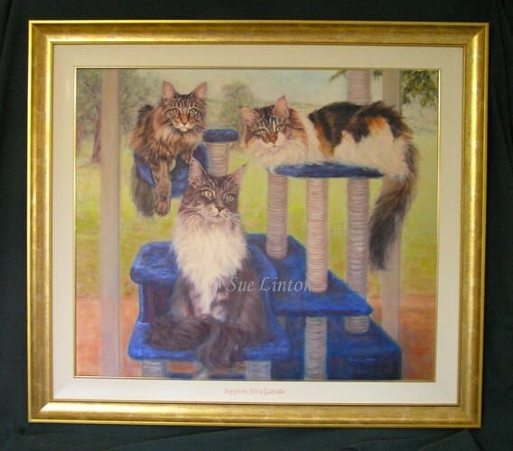 A portrait of a family of Maine coon cats on a climber