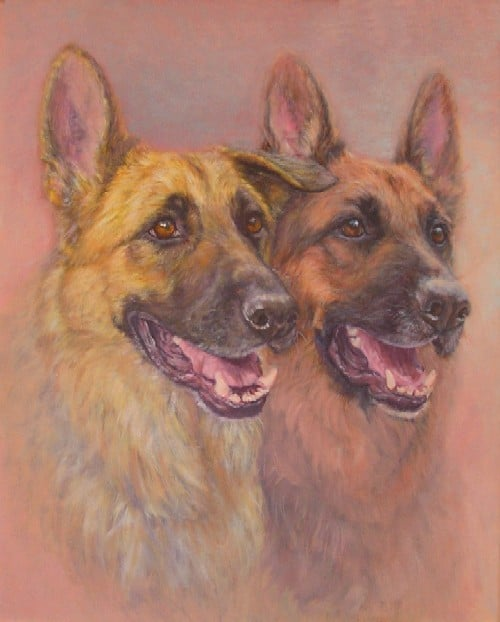 A portrait of two Alsatian dogs
