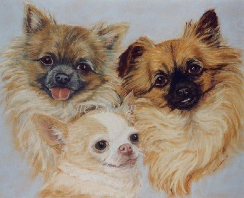 A portrait of 3 chihuahas