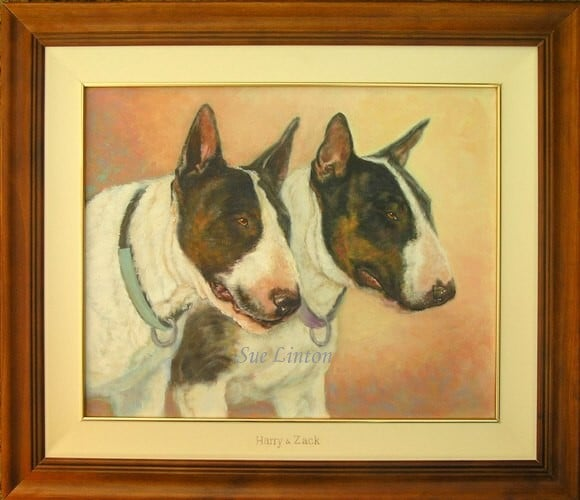 A pet portrait of two bull terriers