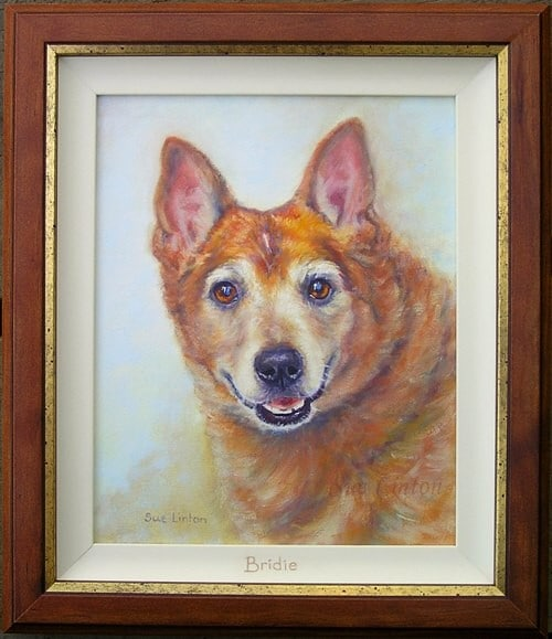 The framed portrait of an old cattledog