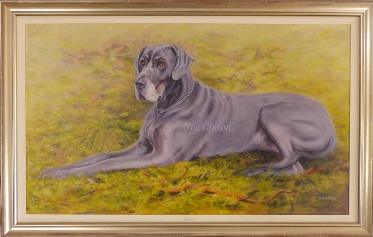 The framed portrait of a great dane dog