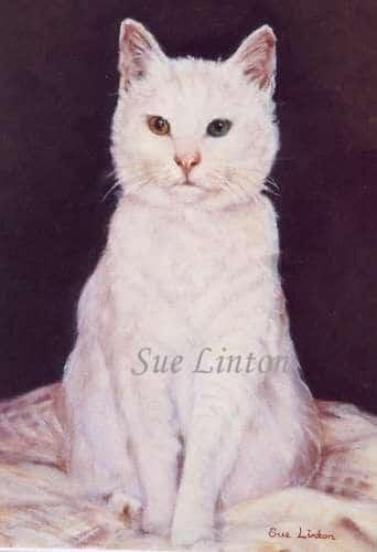 A pet portrait of a white cat