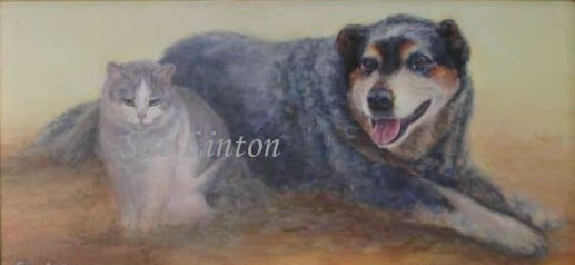 Portrait of a blue cattledog and a cat