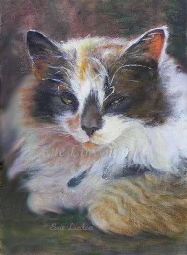 Portrait of a cat half asleep in the sun