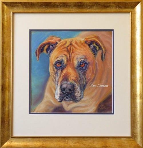 Framed pet portrait of a bull mastiff dog