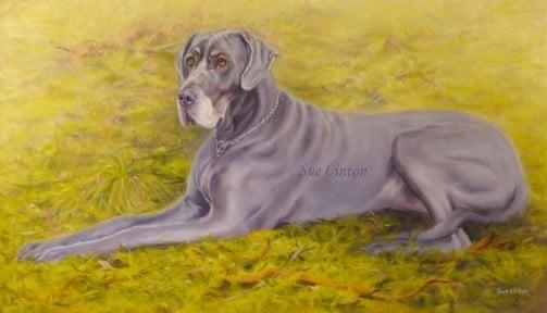 A portrait of a Great dane dog