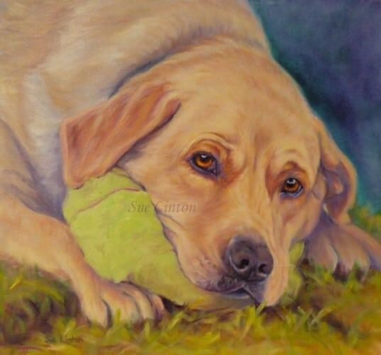 A memorial pet portrait of a labrador dog with his ball
