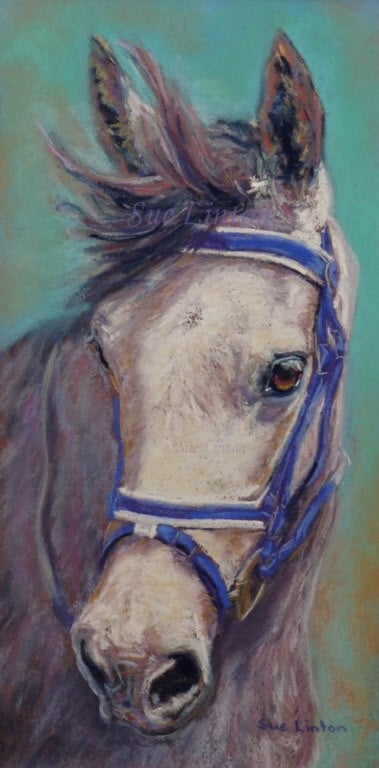 A pet portrait of a grey horse