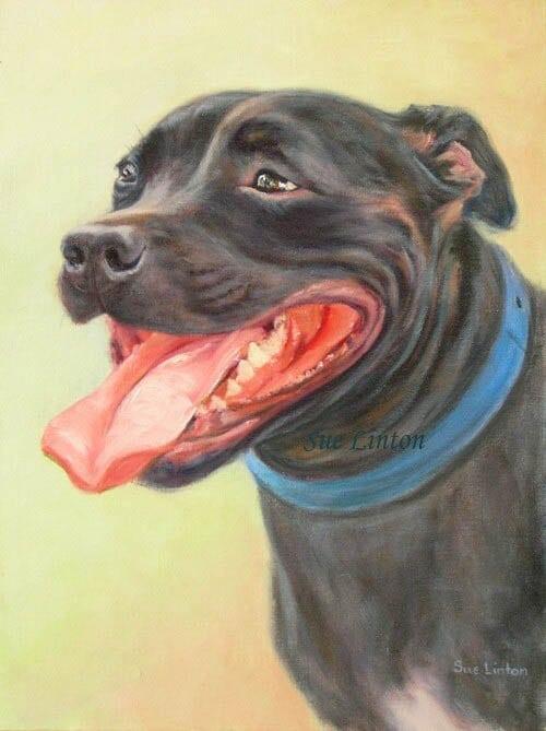 Pet portrait of a Staffy dog
