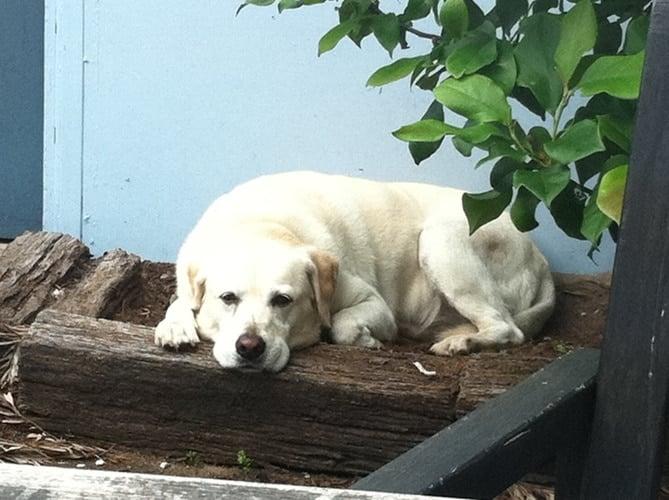 A photo of a dog sunning itself