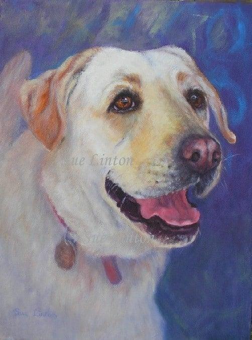 A pet portrait of a labrador dog