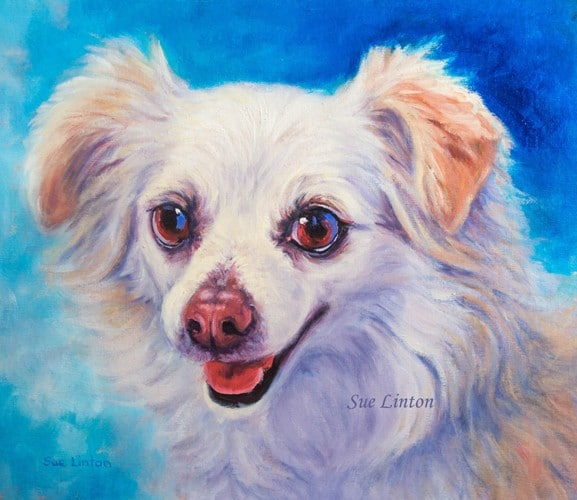 A portrait of a Poemarnian cross dog painted from photos
