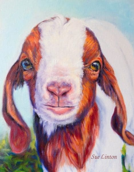 detail of a pet portrait of a miniature goatg