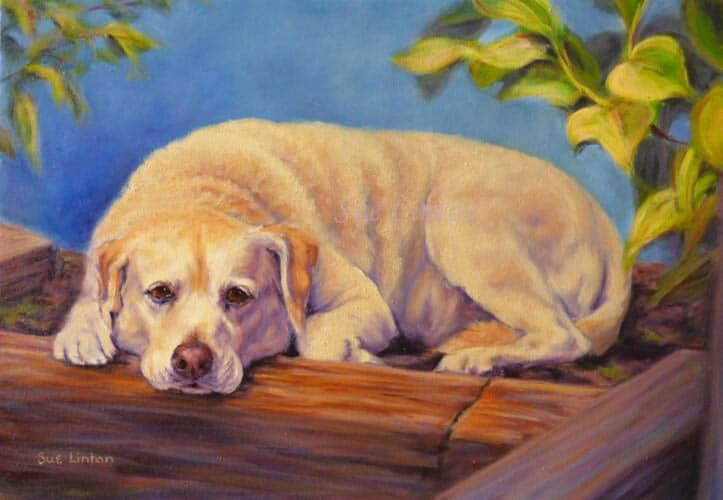 A painting of a labrador dog sunning itself in a garden