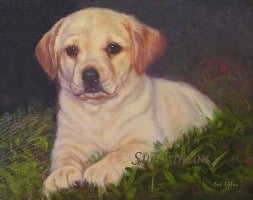 A pet portrait of a labrador puppy