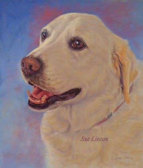 A dog portrait of a Labrador