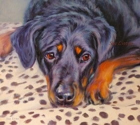 A memorial pet portrait of a Rottwieller