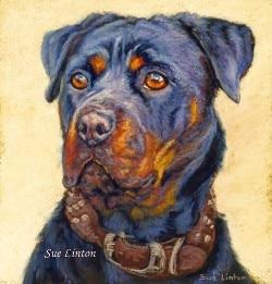 Pastel portrait fo a Rottweiler dog