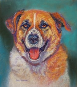 A painted pet portrait of a St Bernard Cross dog
