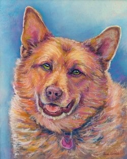 Pet portrait of a red cattledog