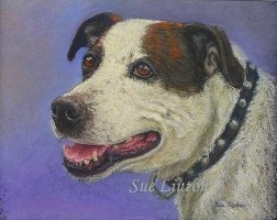 Pet portrait of a dog