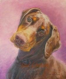 A pet portrait of a Doberman dog