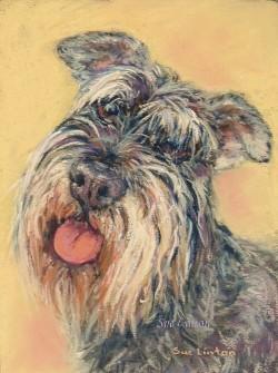 Pet portrait of a miniature Schnauzer dog